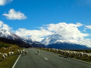 ニュージーランド 卒業旅行