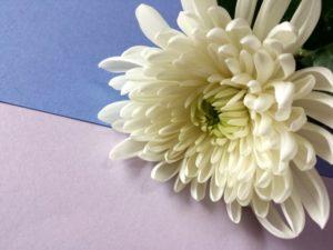 喪中はがきを祖母、祖父、義父、義母、義兄や 兄弟、その配偶者、叔母、叔父に出すべき?