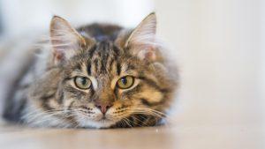 猫の餌のタイマー式自動給餌器