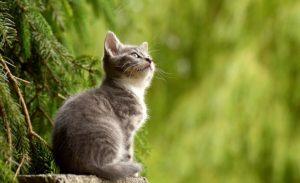 旅行中や留守中の猫の餌やりはどうする?