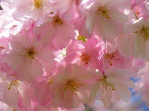 うえの桜まつり ライトアップ 屋台